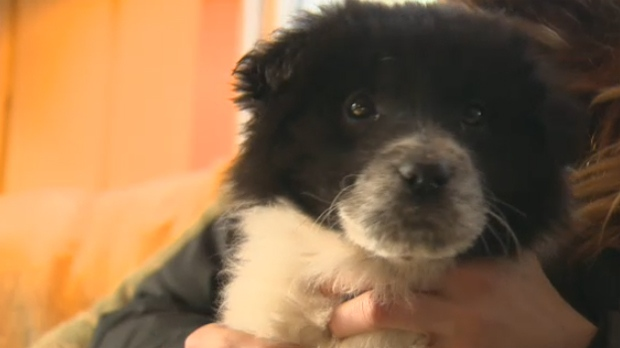 Dozens of unwanted dogs have been rescued from the Stony Nakoda First Nation this winter season