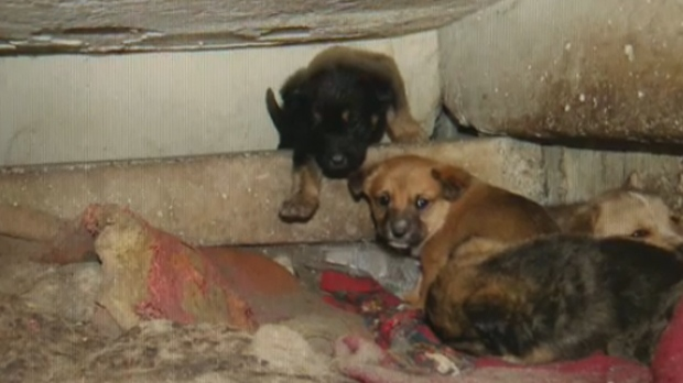 A litter of unwanted dogs were located on the Stony Nakoda First Nation and rescued by the Rocky Mountain Animal Rescue organization