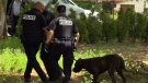 CTV Montreal: Girl, 4, mauled by dog