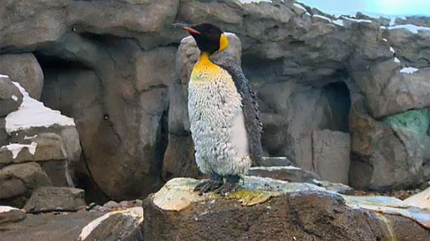 Calgary Zoo, reopening, St. George's Island, Pengu