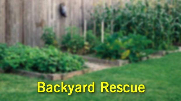 Yard Design Saskatoon: Backyard Rescue