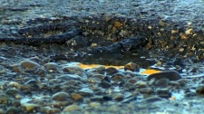 Potholes, spring drivers, asphalt, road repair, po