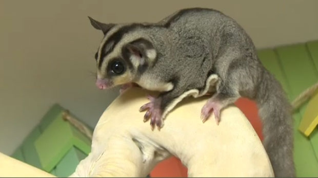The latest cute pets - to be abandoned at the Humane ...