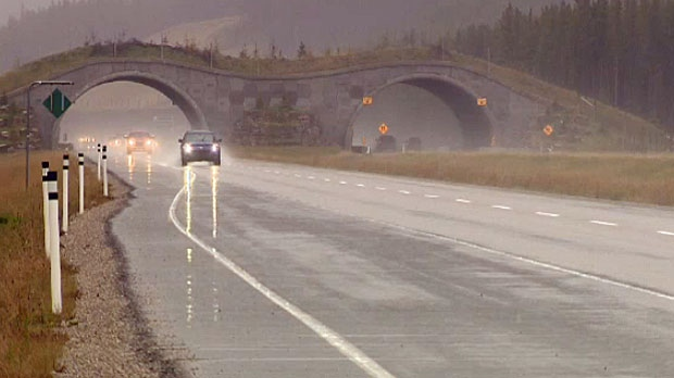 There are four new wildlife overpasses and 18 underpasses along the highway.