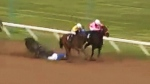 CTV Winnipeg: Jockey seriously injured at Downs