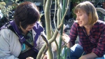 Shurli Chan (left) is one of many gardeners taking part in a three-year project that examines how community gardening can support mental health rehabilitation.
