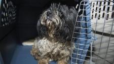 Surrendered dog - SPCA investigation