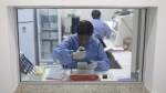 A graduate student works on analyzing samples to identify the Zika virus in a laboratory at the Fiocruz institute in Rio de Janeiro, Brazil, Friday, Jan. 22, 2016. (AP / Leo Correa)