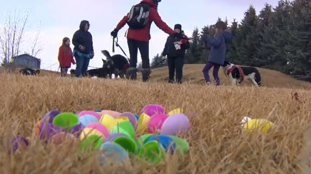 Empty egg shells on the Calaway Park lawn following a successful National Service Dogs fundraiser hunt