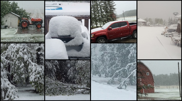 MyNews users sent in pictures of a layer of snow blanketing parts of Alberta on Friday.