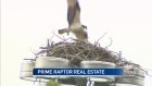 CTV Calgary: Raptor claims prime real estate