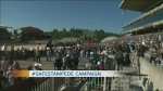 Stampede alongside harassment campaign