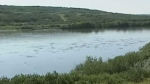 A cleanup is underway after oil from a Husky pipeline leaked into the North Saskatchewan River.
