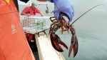 In this undated file photo, a sternman holds a lobster caught off South Bristol, Maine. (AP / Robert F. Bukaty, File)
