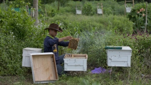 A researcher from the Thai Department of National Parks checks the quality of beehives before installing them around the perimeter of a small farm in hopes of preventing wild elephants from intruding on the property in Pana, southeastern province of Chanthaburi, Thailand on Friday, Aug. 19, 2016. (AP / Gemunu Amarasinghe)