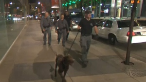 The CPS Tactical Team brought dog units in to help them search the 10th floor of First Canada Centre on 17 Avenue S.W. on Wednesday night.