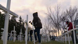 Volunteers place crosses in a field along Memorial Drive on Saturday morning. The display will remain through Remembrance Day.