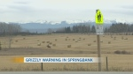 Bear warning in Springbank