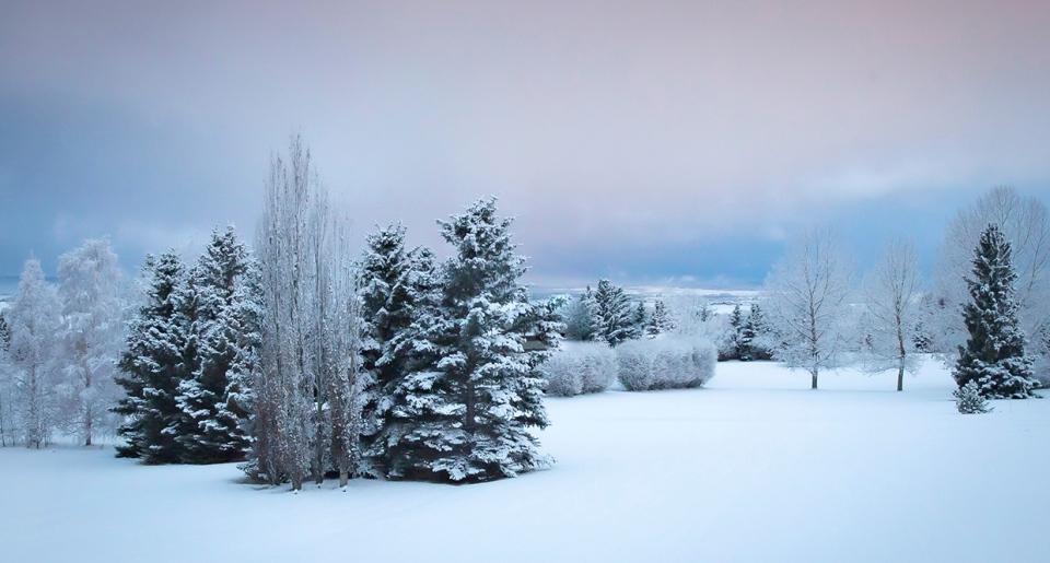 Calgary, musim dingin, Audrey