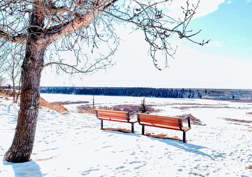 Calgary, winter, park, Dwight