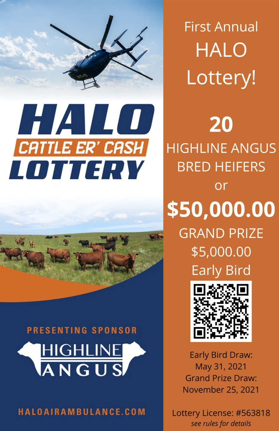 calgary, cattle, halo rescue, cows, heifers, rescu