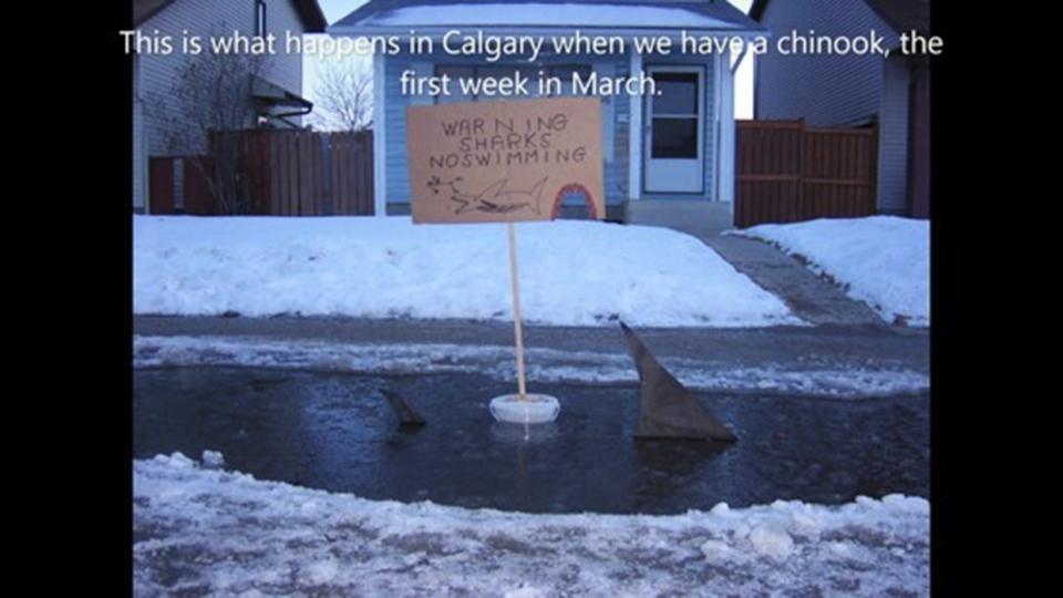 Calgary, chinook, puddle, melt, shark