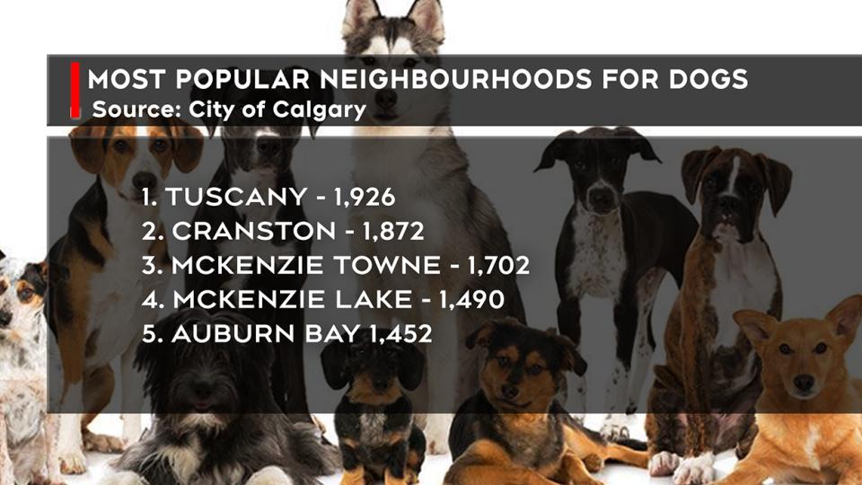 dogs, favourite, breeds, edmonton