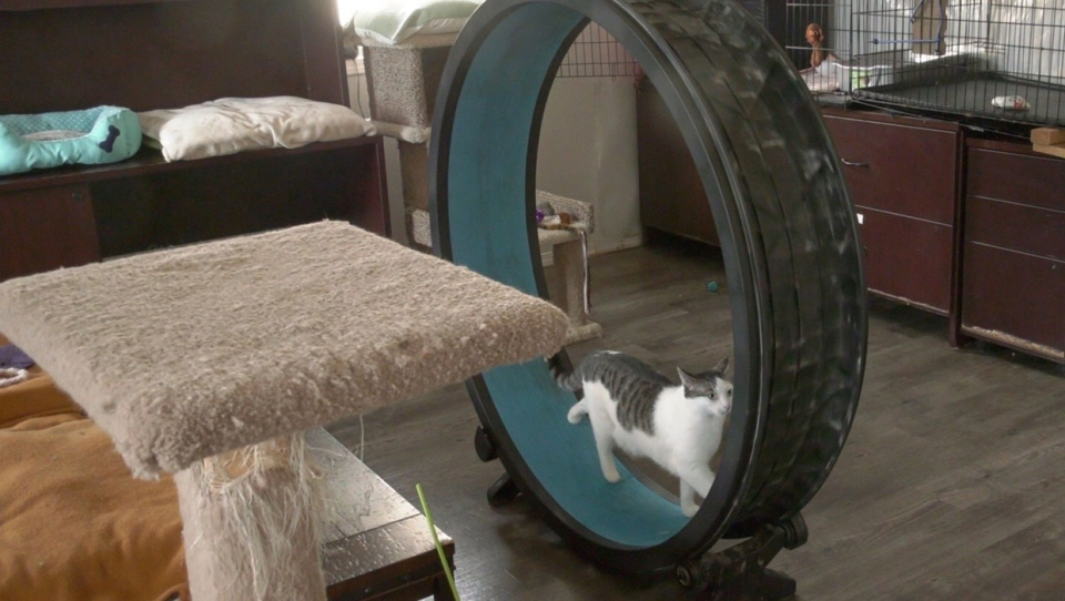 calgary, lethbridge, cat rescue, concerns, animal