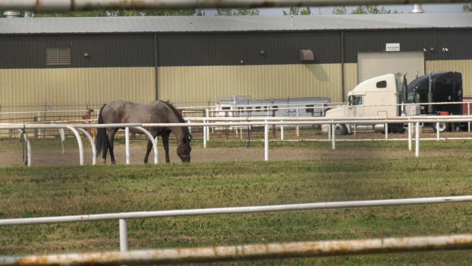 calgary, rodeo, chuckwagon, euthanized, horse, dri