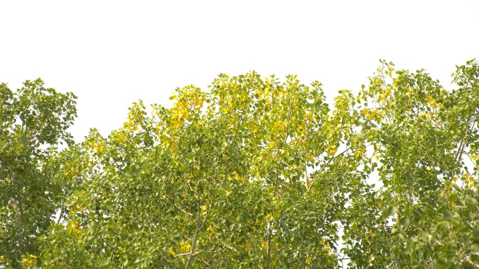 trees, leaves, autumn, calgary
