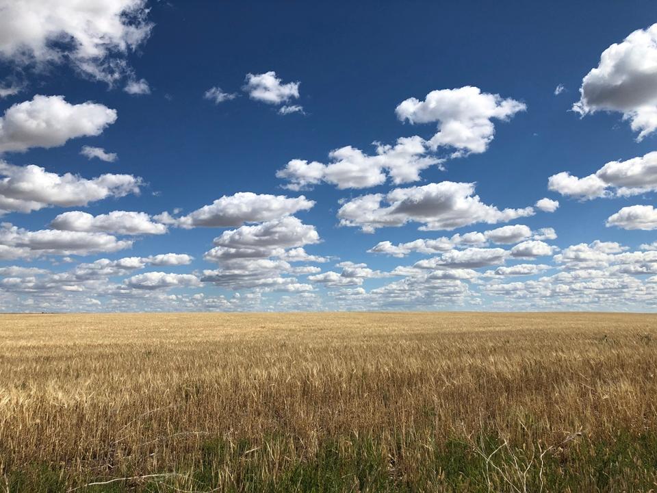 Southern Alberta, field, clouds, viewer, Mark