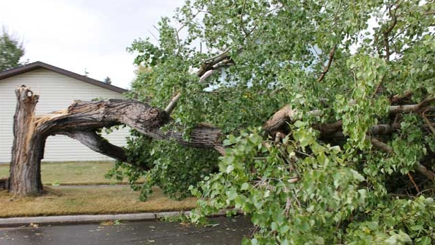 September 10th, 2012 aftermath from wind storm that hit Hanna, Alberta (Photo Courtesy: Kyla Bates)